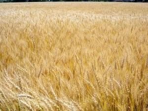 Przynajmniej część naszych producentów ekologicznych jest zainteresowana przystąpieniem do zrzeszenia