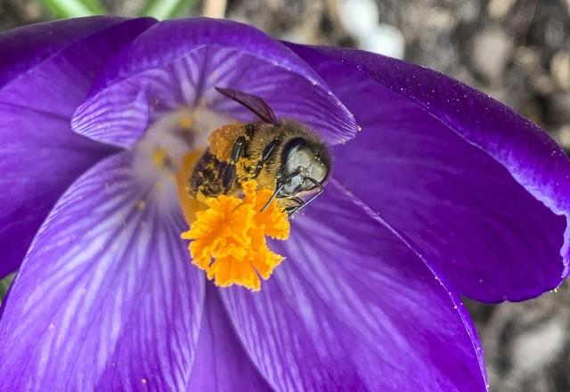 Wiosna się budzi w rzeszowskich ogródkach. Pogoda dopisuje, dzisiaj ma być 15, a jutro nawet 17 stopni Celsjusza. Zobaczcie galerię zdjęć.