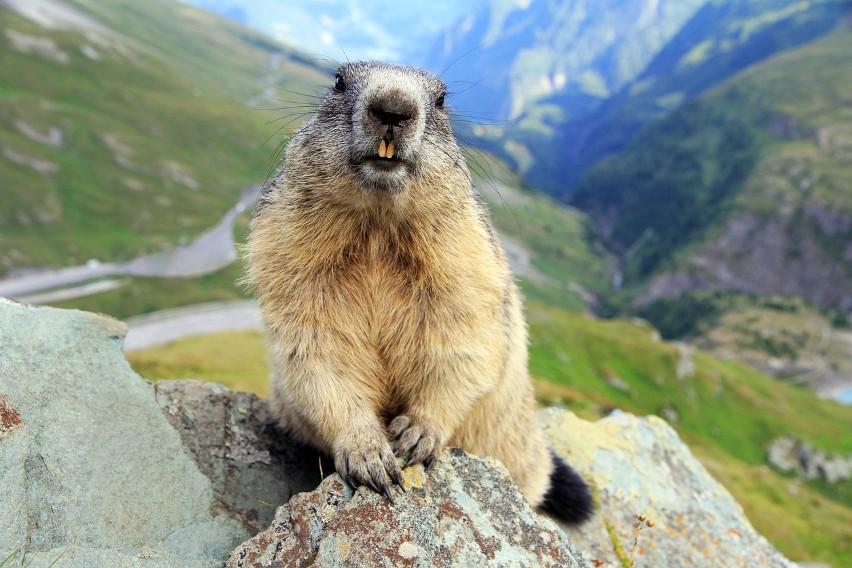 Zwierzęta zagrożone wyginięciem w Polsce to ponad 2000...