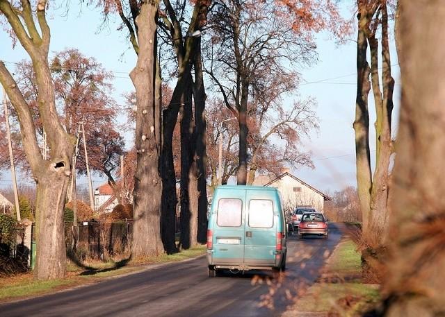 Drzewo, z którego spadła gałąź przy trasie Laskowice - Jeżewo, zostało właśnie wycięte