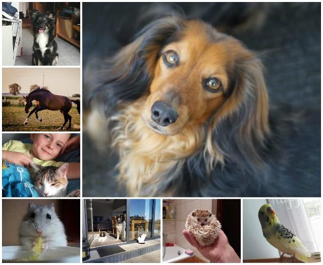 Światowy Dzień Zwierząt 2018. Pupile czytelników Głosu Wielkopolskiego to nie tylko koty i psy. Zobaczcie