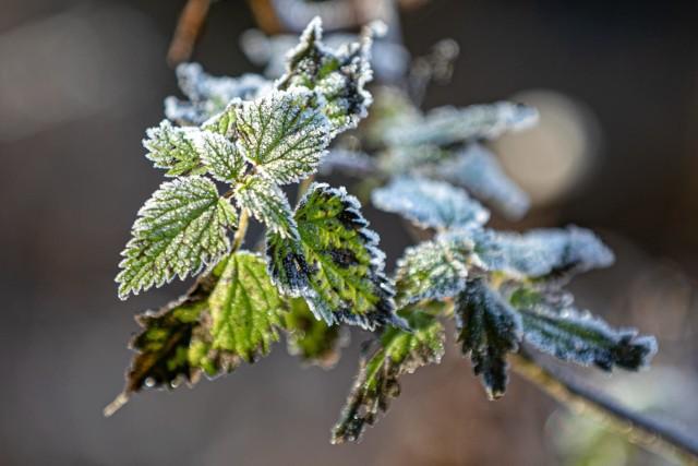 """""""Zimni ogrodnicy"""" i """"zimna Zośka"""" to nazwy dni majowych, w których prawdopodobne jest ochłodzenie."""