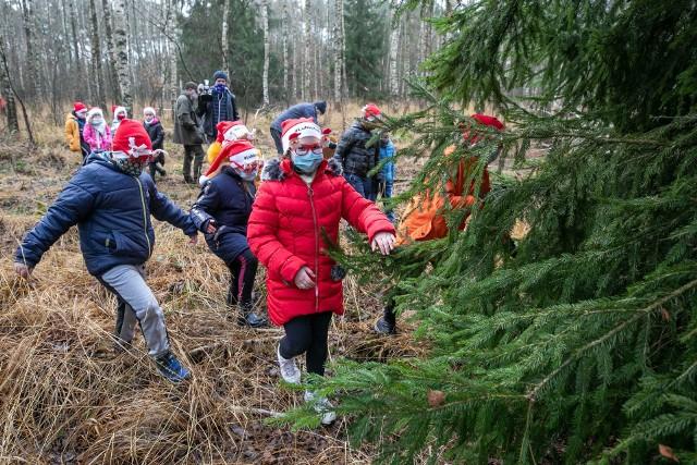 Dzieci z powiatu chełmińskiego pomogły wybrać choinkę, która stanęła  przed Urzędem Marszałkowskim w Toruniu. Drzewko pochodzi z lasu w okolicach Raciniewa w gm. Unisław