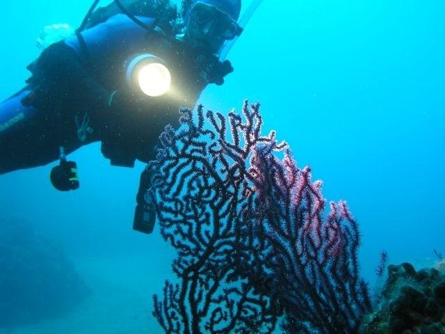 Pod wodą można zobaczyć olbrzymie, brunatno-czerwone gorgonie.