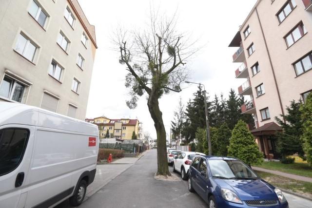 Drzewo na środku osiedlowej jezdni? Czemu nie? Tak właśnie jest przy ul. Czarlińskiego w Toruniu