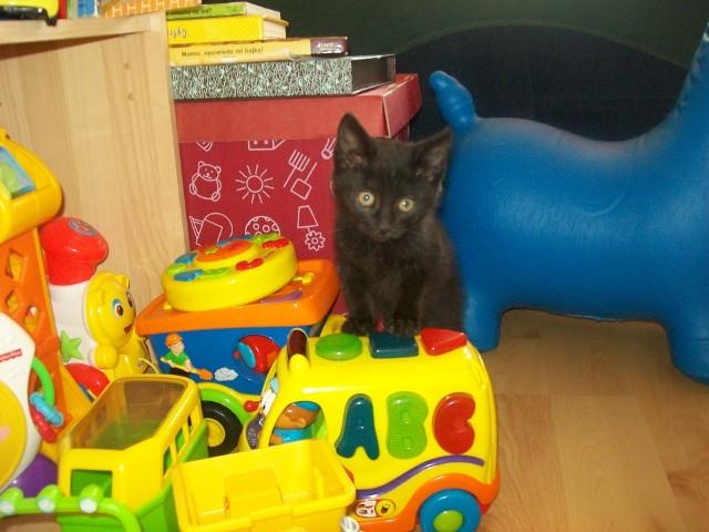Kot w mieszkaniuWłaściciele lokali do wynajęcia mają coraz mniejszy problem ze zgodą na wprowadzenie się ze zwierzakiem. Niestety dziecko to dla nich większy problem.