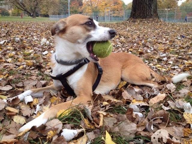 Właściciele psów muszą uważać na spacerach!
