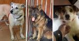 Mysłowice. Schronisko dla zwierząt zostanie zamknięte. Na nowy dom czekają już tylko cztery psy