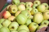 Tak niskich zbiorów jabłek nie było od wielu lat