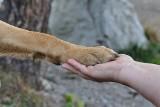 """80 psów odebranych z rąk właścicieli. """"Można mówić o znęcaniu się nad zwierzętami"""""""