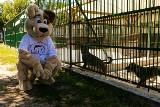 Międzynarodowy Dzień Psa. Tak świętowaliście w schronisku