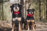 Te psy do adopcji ze schroniska w Radomiu czekają na własny dom. Poznaj je i przygarnij (ZDJĘCIA)