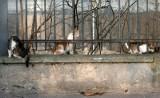 Kraków. Kto policzy dzikie koty w mieście? Urzędnicy szukają chętnych