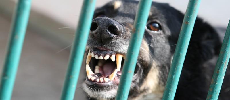 Wolontariusze fundacji twierdzą, że ze schroniska brano czworonogi do trenowania psów walczących.