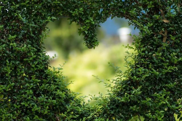 Zaadoptuj ogródek na wakacje! Poszukiwani są chętni do nowego projektu Stowarzyszenia 9dwunastych