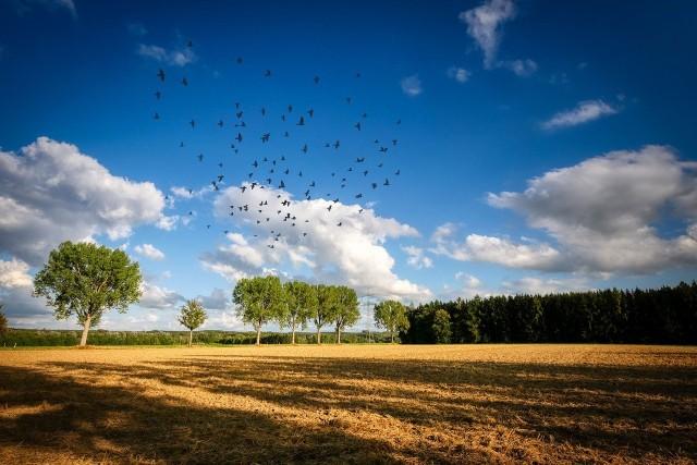 1 września rozpoczął się Powszechny Spis Rolny 2020