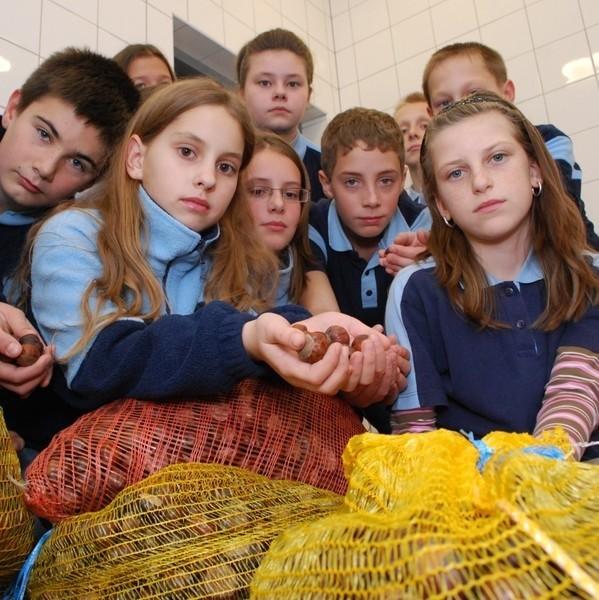 - Zbieraliśmy kasztany przez miesiąc. Szkoda, że na próżno - mówią szóstoklasiści z kółka ekologicznego.