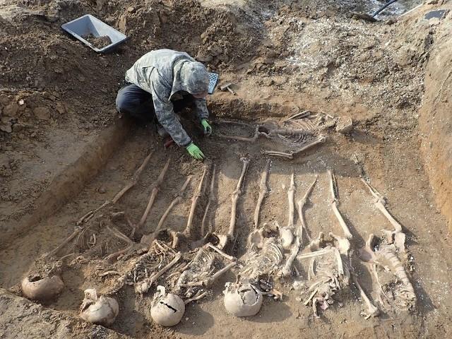 Tuż za murami szpitala przy ul. Walczaka w Gorzowie archeologowie odkryli zbiorową mogiłę. W grobie znajdowały się kości 26 osób. - Byli to mężczyźni. Według danych historycznych jakie zebraliśmy, to żołnierze, którzy prawdopodobnie zmarli w szpitalu - mówi Maksymilian Frąckowiak, archeolog poznańskiej Pracowni Badań Historycznych i Archeologicznych POMOST.Na ten grób natknięto się podczas prac budowlanych w ubiegłym roku. Wtedy poinformowano prokuraturę, która zabezpieczyła część szczątków. Archeologowie z POMOSTU odebrali szczątki z medycyny sądowej. Po uzyskaniu wszystkich stosownych zezwoleń rozpoczęli prace pod szpitalem, które realizowali 8 i 9 marca. Szczątki, które odnaleźli, to niemieccy jeńcy, którzy byli więźniami obozu NKWD. - W tym obozie wybuchały epidemie, między innymi tyfusu. Tych chorych przewożono do szpitala przy Walczaka. Tam bez odpowiedniej opieki medycznej umierali. Chowano ich na zapleczu tego szpitala, na terenach dzisiejszych ogródków działkowych - tłumaczy Maksymilian Frąckowiak. O tym, że w grobowcu pogrzebano niemieckich żołnierzy mogą potwierdzać znajdujące się tam niemieckie znaki tożsamości. - Nie wiemy czy oni zmarli w wyniku choroby, czy z innej przyczyny. W każdym razie nie było śladów postrzałów. Ponieważ istnieje duże prawdopodobieństwo występowania dalszych mogił, teren będzie przez nas nadal przeszukiwany - dodaje Maksymilian Frąckowiak. Obóz NKWD znajdował się na terenie dzisiejszego Stilonu. Funkcjonował w latach 1945-1947. W październiku szczątki zostaną pochowane na niemieckim cmentarzu wojennym w Starym Czarnowie (woj. zachodniopomorskie).