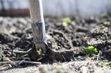 Mączka bazaltowa i popiół drzewny – naturalne nawozy mineralne. Jak je stosować w ogrodzie