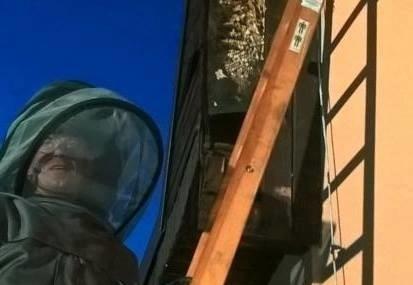 Strażacy z OSP w Kożuchowie mają odpowiednie ubranie i sprzęt do walki z szerszeniami