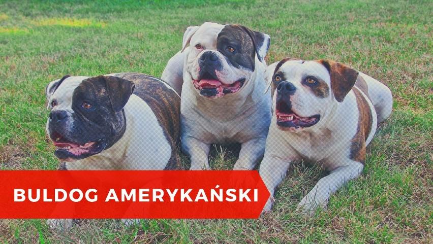 To pies stróżujący i obronny, który nie tylko w Polsce jest...