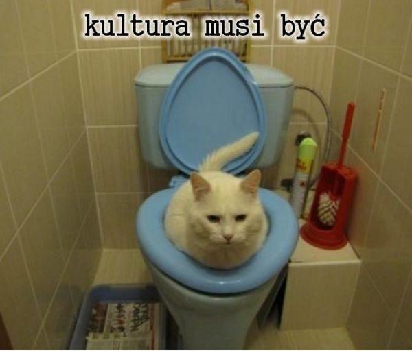 Już jutro, 17 lutego Światowy Dzień Kota! To właśnie wtedy świętować będą właściciele czworonożnych, futrzastych i nieco kapryśnych czworonogów. Postanowiliśmy sprawdzić, co w trawie piszczy i dlaczego internauci uważają swoich kocich pupili za... niezwykle walecznych wojowników. Tego nie spodziewał się nikt  - koty to jedne z najbardziej memicznych istot na świecie! Instrukcja obsługi kota, niewolnik czy codziennie jest święto kotów - z tego śmieją się w sieci! Oto najlepsze MEMY z kotami w roli głównej.