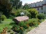 Otoczenie zabytkowego Collegium Gostomianum w Sandomierzu zamieni się w zieloną oazę dla owadów i ptaków. Zobacz, co powstanie [ZDJĘCIA]