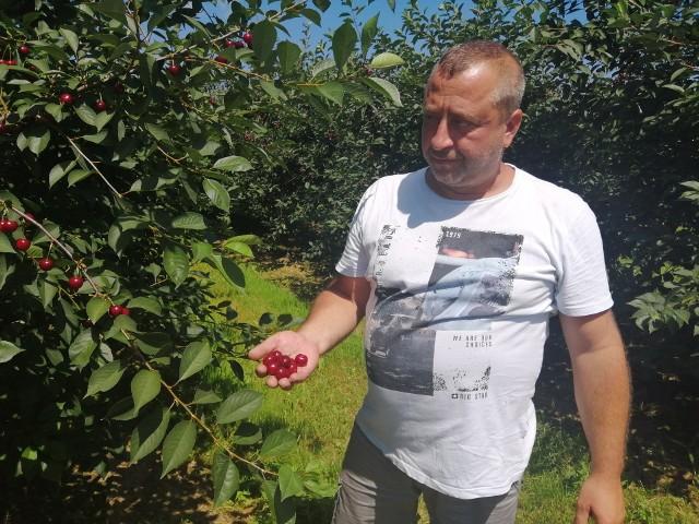 Początkowo cena za kilogram wiśni pierwszej klasy wynosiła dwa złote, dziś już mamy 1 złotych 50 groszy - mówi właściciel sadu Grzegorz Basak.