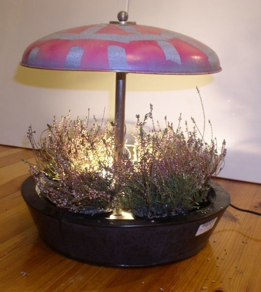 Tego typu kompozycja nigdy sie nie znudzi. Gdy przekwitną wrzosy, mozna lampe obsadzic (w zalezności od pory roku) ozdobną czerwoną papryczką, miechunką lub kwiatami.