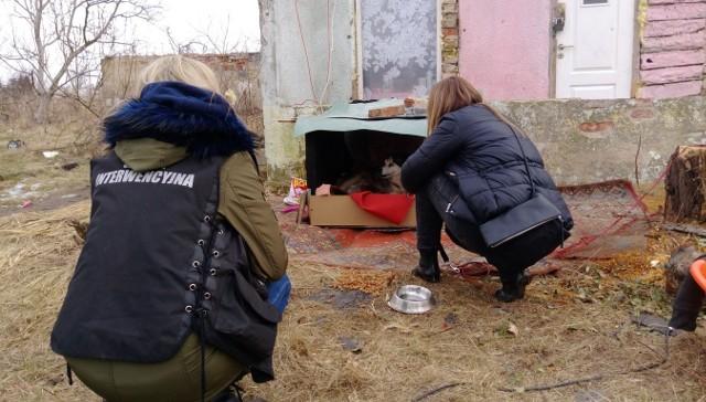 Interwencję na koczowisku Fundacja Mondo Cane przeprowadziła w marcu 2017 r. Odebrano wtedy 20 psów.