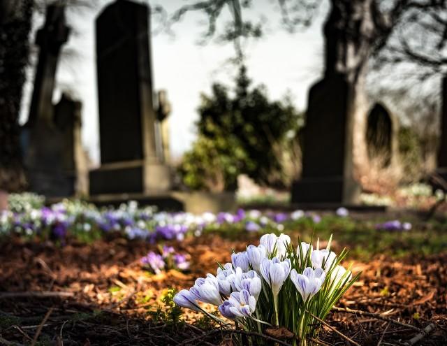 Wiele roślin sadzonych na cmentarzach Wielkopolski miało znaczenie symboliczne lub było otoczonych czcią. Zobacz jakie znaczenie mają między innymi bluszcz, barwinek, róże, lilak, robinia akacjowa.Przejdź do galerii ------>