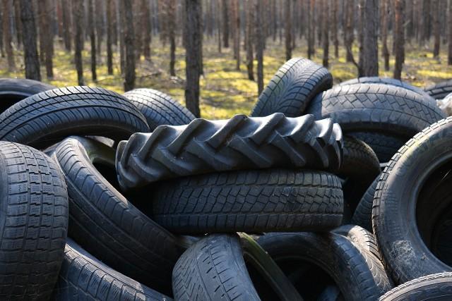 Setki opon porzucono w lesie przy drodze Brody - Zasieki. Wkrótce zostaną sprzątnięte i zutylizowane.