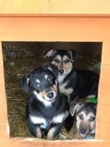 Animalsi i strażacy uratowali psią rodzinę. Szczeniaka można już adoptować (ZDJĘCIA)