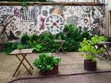Najpiękniejsze ogródki na Piotrkowskiej cieszą oczy soczystą zielenią. Konkurs rozstrzygnięty!