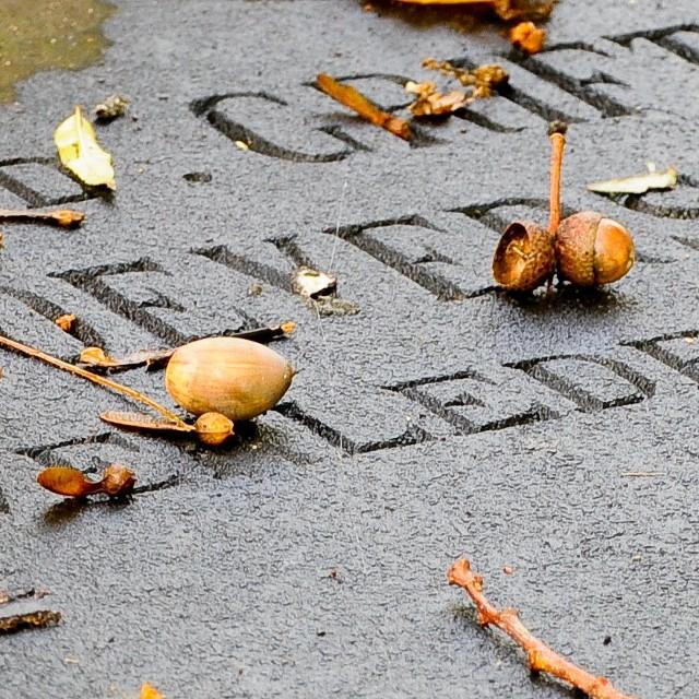Spadkobiercy (zgodnie z art. 922 §1 Kodeksu cywilnego) dziedziczą ogół praw i obowiązków po zmarłym.