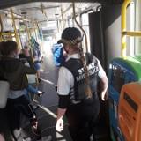 Strażnicy miejscy kontrolują autobusy i tramwaje. Mandaty za niezasłonięte usta i nosy