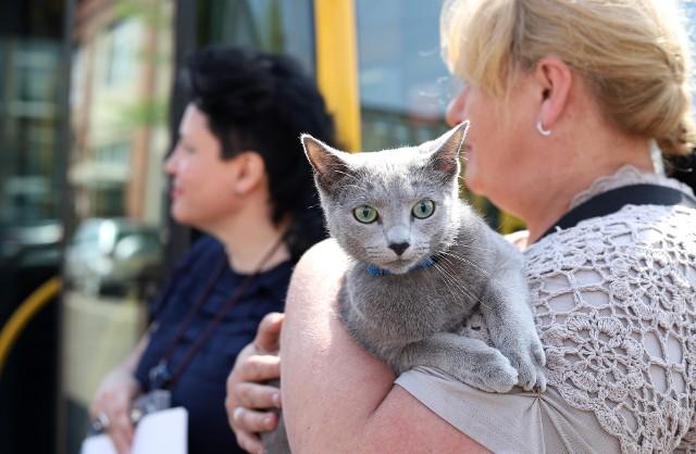 Kot Valenty odnaleziony po pięciu miesiącach przez kierowcę MPK
