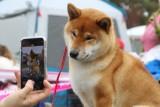 Cudne rasowe psy. Zobaczcie zdjęcia z wystawy na Stadionie Olimpijskim [ZDJĘCIA]