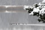 Zalew Klekot koło Włoszczowy w zachwycającej zimowej szacie. Zobacz jak wygląda [ZDJĘCIA]