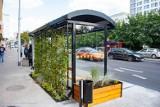 Zielone projekty w budżecie obywatelskim. A wśród nich budowa ogrodu miejskiego czy zielone przystanki autobusowe