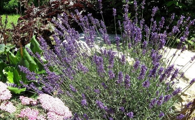W polskich warunkach z powodzeniem możemy stworzyć ogród w stylu prowansalskim. Będzie on pełen zapachów, a łagodne kolory kwiatów podziałają relaksująco.