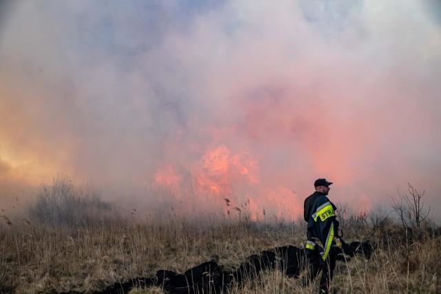 Pożar w Biebrzańskim Parku wybuchł 19 kwietnia i strawił prawie 5,3 tys. hektarów bagiennych łąk i lasów.