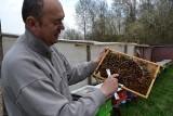 Rady dla początkujących pszczelarzy. Pszczoły są na topie, ale szkodzi im słomiany zapał pszczelarzy!