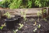 Jak zrobić zielnik? Zobacz jak przygotować zielnik na działce, balkonie oraz w kuchni. Czy wiesz jakie zioła można sadzić razem?