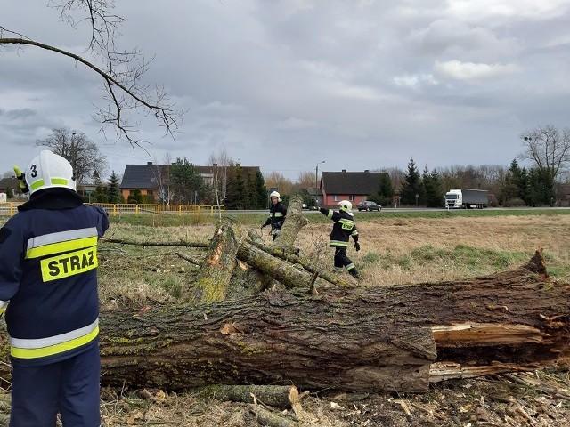 Mocno wieje w naszym regionie. Strażacy są wzywani do powalonych drzew. Interweniowali m.in. w Miastku, Suchorzu, Znakowie, Przechlewie. Uważajcie na siebie.