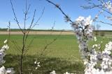 Europejski Zielony Ład może namieszać w gospodarstwach. Rolnicy apelują o rozsądne zmiany