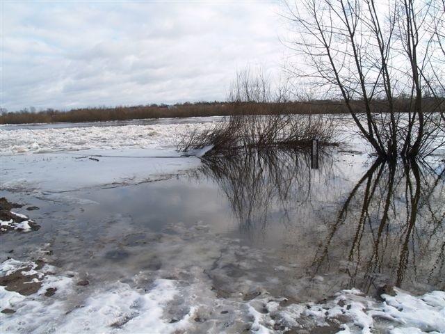 W ciągu godziny poziom wody w Bugu w Wyszkowie rośnie o około centymetr