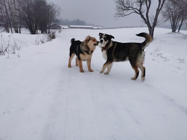 Pani Małgosia od wczoraj szuka dwóch psów.