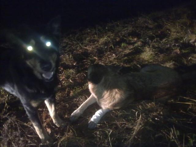 Wciąż możemy pomóc wilczurom z Anastazewa