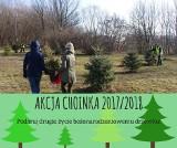 """Kraków. Rusza """"Akcja Choinka"""" organizowana przez ZZM. Podlewałeś choinkę w doniczce? Możesz oddać, a dostanie nowe życie na wiosnę"""